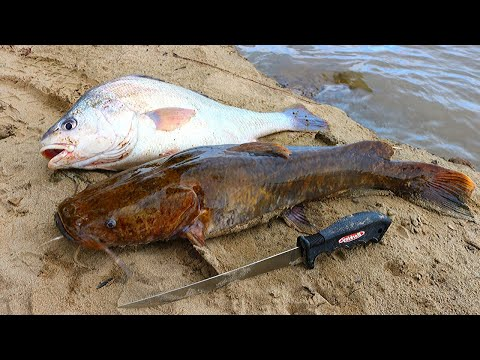 Catch N' Cook Flathead Catfish & Drum | Ace Videos