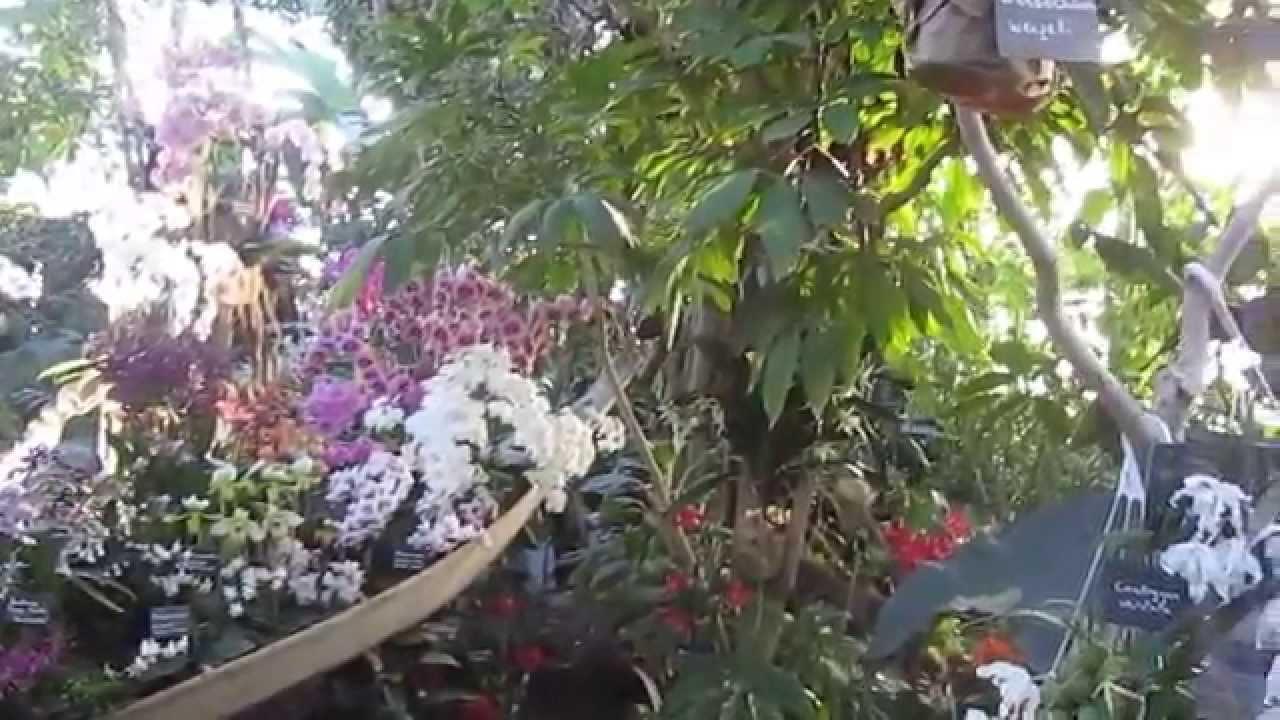[Le Jardin] L\'Exposition des Orchidées d\'Asie dans les Grandes Serres du  Jardin des Plantes