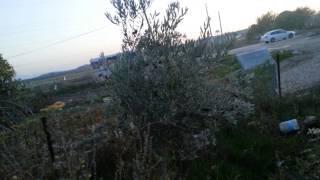 Biber -   Zeytin  Bahçesi  Sulama, Bakım, Gübreleme, Verim