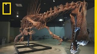 Bigger Than T. rex: Spinosaurus | National Geographic