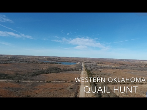 Wild Quail Hunting With Pointers | Oklahoma Public Land | TheWolf Outdoors