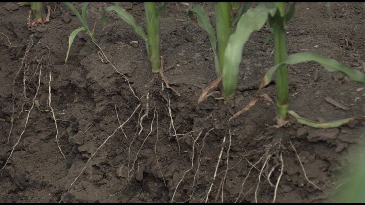 Taking Control with Subsurface Drip Irrigation