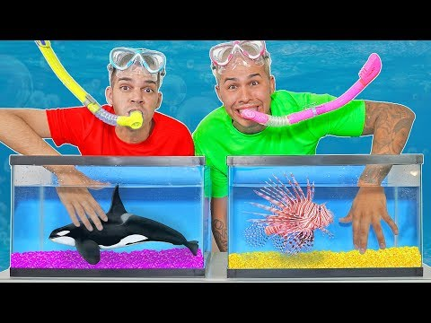 WHAT'S IN THE BOX CHALLENGE!? - UNDERWATER OCEAN ANIMALS!