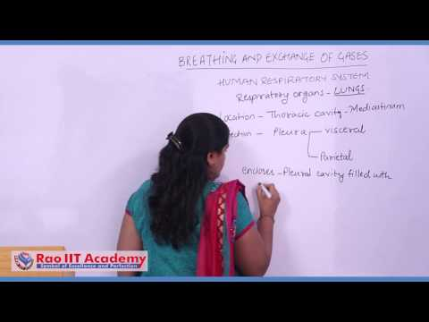 Respiration and Respiratory System of Man - NEET AIPMT AIIMS Zoology Video Lecture