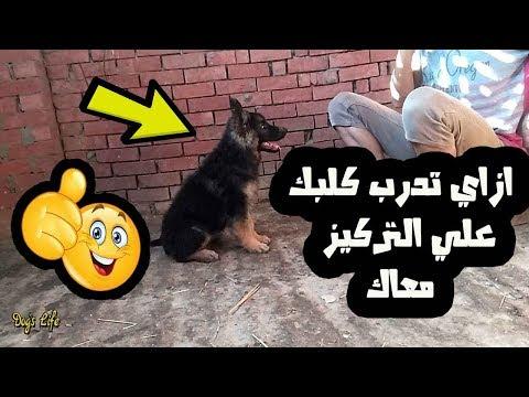 تدريب الكلاب (1) ازاي تدرب كلبك علي التركيز معاك وتعرفه اسمه 101