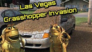Las Vegas Grasshopper Invasion Clips