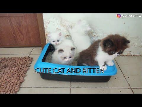 Cute Cat and Kitten   Snowy di Operasi Caesar