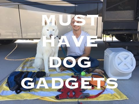 Must Have Dog Gadgets For RVing With Dogs | RV Life