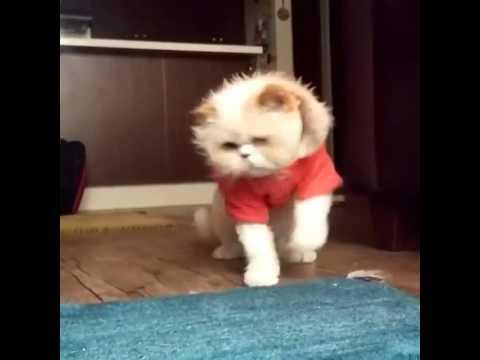 dancing cat قط راقص