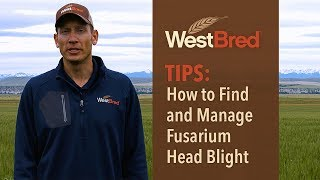 How to Find and Manage Fusarium Head Blight