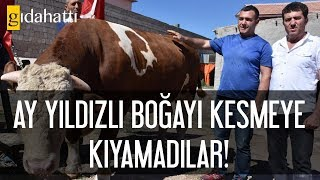 Ay yıldızlı boğayı kesmeye kıyamadılar! Cumhurbaşkanı Erdoğan'a hediye edecekler…