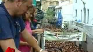 Raw Video: World's Biggest Tomato Fight