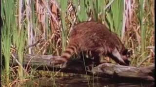 Predators of the Marsh
