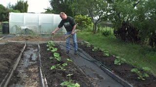 How To Plant Pumpkins, Zucchinis And Cucumbers