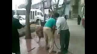 Sokak ortasında aslan yıkıyor :):):)