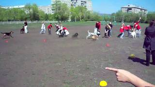 Конкурс самой быстрой собаки