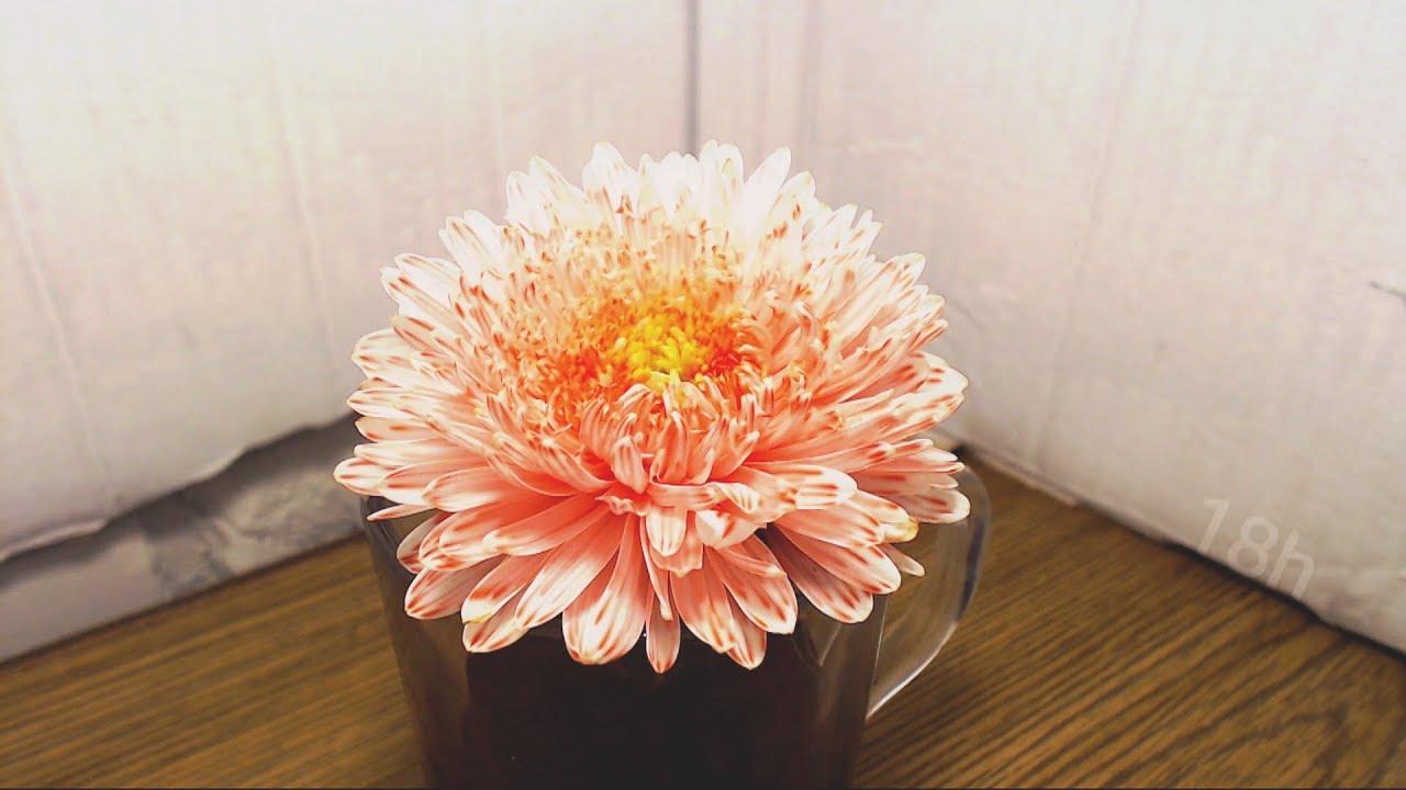 Przyśpieszone kolorowanie białych kwiatów