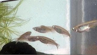 東山動植物園 世界のメダカ館流のメダカ飼育法を紹介した、長さ10分ほど...