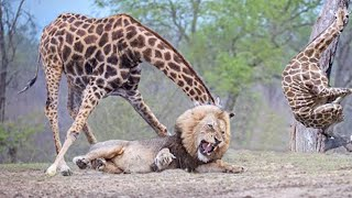 15 Aggressive Animals That Hate Each Other