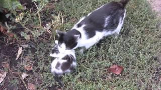 Кошка несет котенка. Заботливая кошка. mother cat saves kitten