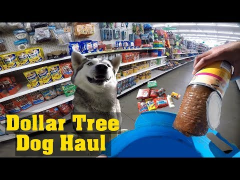Buying My Siberian Husky EVERYTHING HE TOUCHES! (Dollar Tree Haul)