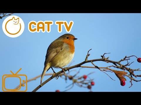 Bird TV 🔴 Interactive entertainment videos for cats!