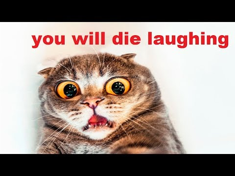 Super Funny cats, Cute Kittens And Funny Kitten Videos Compilation 2017 | Cat Vines Compilation 2017