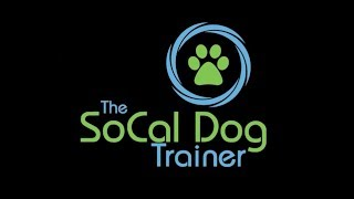 Dog Training: What to expect from a 3 week board and train