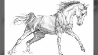 Рисунки лошадей ( Чёрно-белые всё как полагается)
