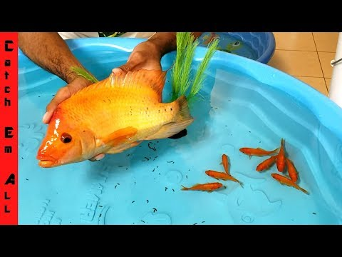 FISH BATTLE ROYALE Indoor Mini POOL POND BUILD!