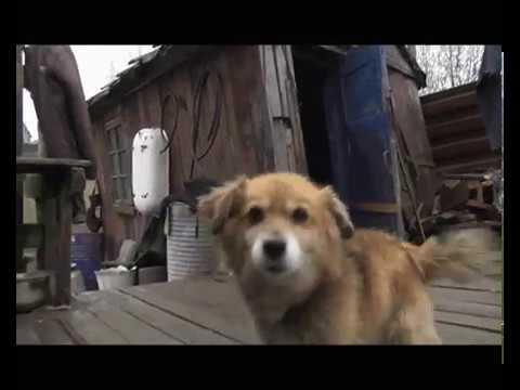 В Сосногорске проводится проверка по информации о жестоком обращении с животными