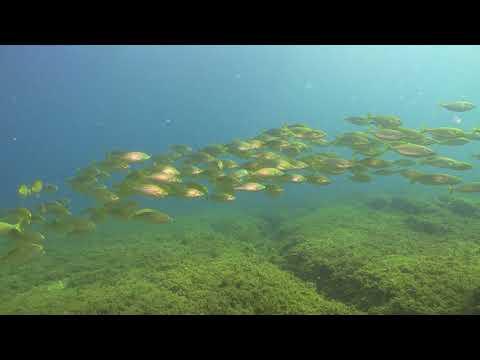 Kuşadası reef diving by boat.  Video by Turgay Ali Şanlı