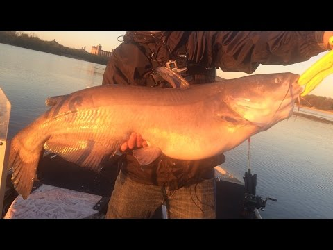 Personal Best Catfish Caught from the Tennessee River!!!