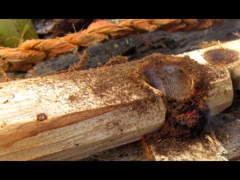 """How to """"Build"""" a Friction Fire Ember: Step by Step with Up Close Footage"""