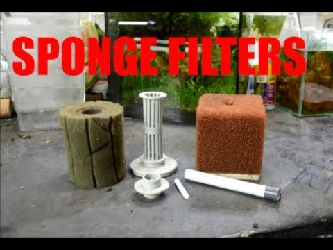 The How and Why of Sponge Filtration- The Quick and Dirty