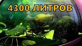 Огромный аквариум и большие рыбы