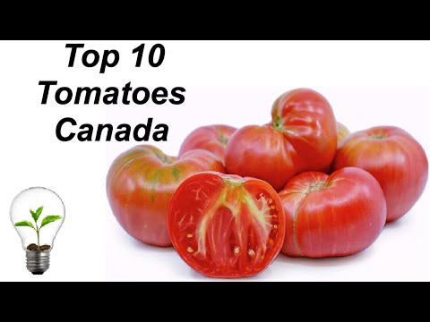 Top 10 Greenhouse Tomatoes for Canada and French's Ketchup