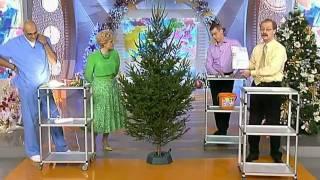 Новогодняя елка. Как ее правильно выбрать(, 2011-12-27T11:49:04.000Z)