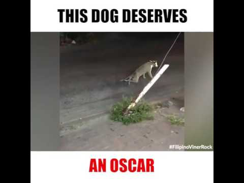 Dog Deserves Oscar for Best Actor | Animals Have Sense of Humor Too