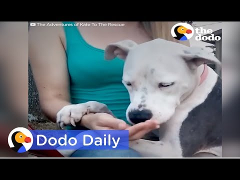 Dog Rescue: Dog Tied Up for Weeks After Owner Passes: Best Animal Videos | The Dodo Daily