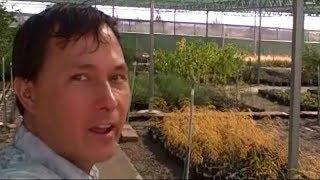 Edible Landscaping Plants for Desert Gardening
