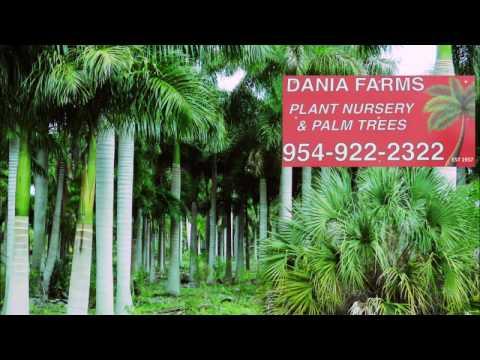 Dania Farms - Palm Tree Farm & Plant Nursery - Broward, Dade, Miami