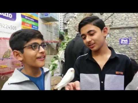 Visited at Pet Studio Shop in Karachi