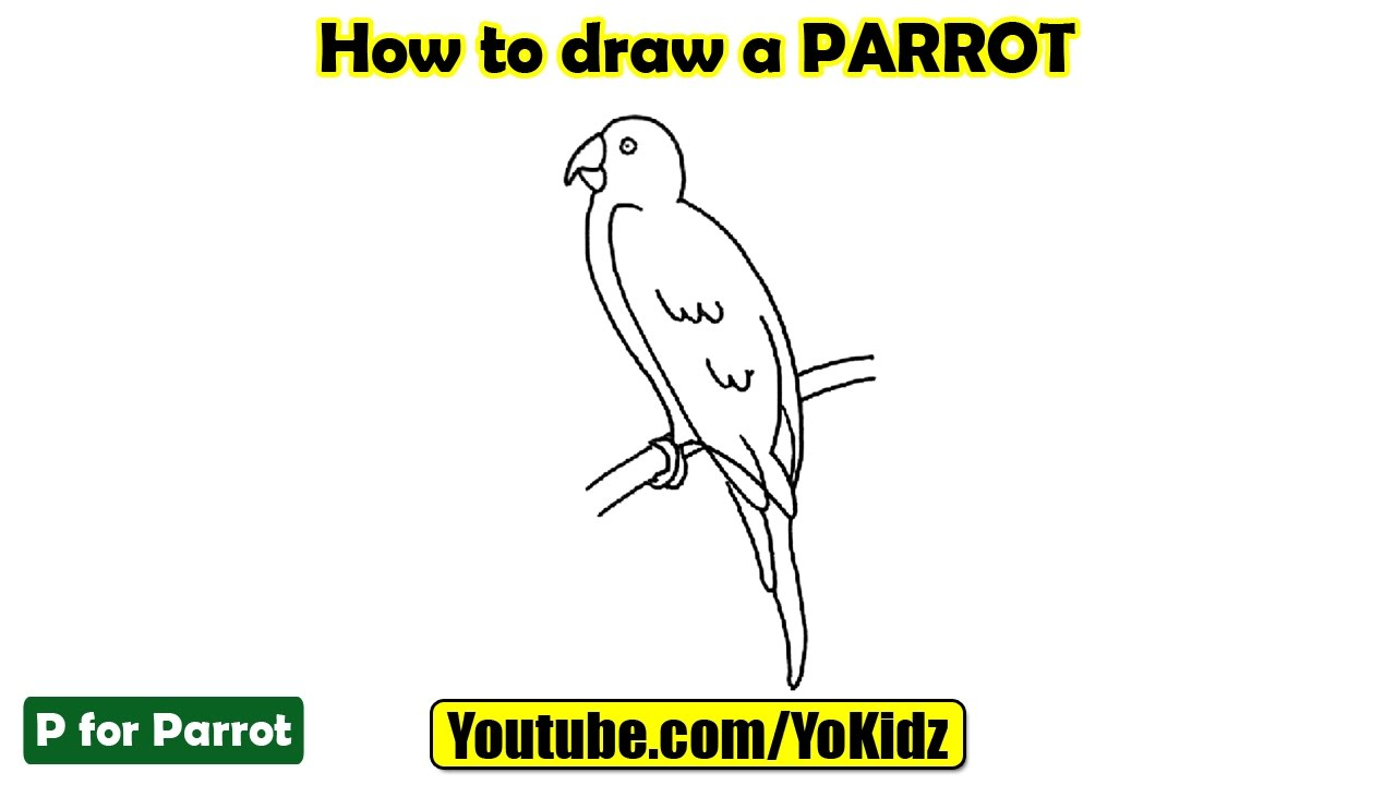 Uncategorized Draw A Parrot how to draw a parrot youtube
