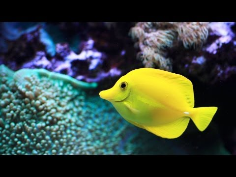 Easiest Saltwater Fish to Keep | Aquarium Care