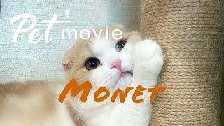 ペットムービー Monet ver2 Pet'movie PV