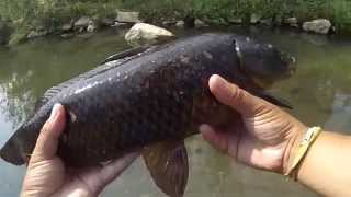 Top Water Carp Fishing On Burger King French Fries (willow Grove, Pa)