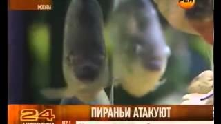 Пираньи атакуют Дон Arbus TV
