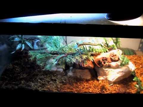 Naturalistic Garter Snake Vivariums - YouTube