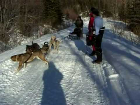 Quesnel-Barkerville-Dogsled_MailRun_2010-YouTube.mov
